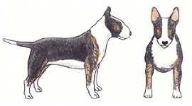 blk-brindle-illustration