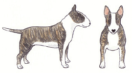 brwn-brindle-illustration