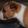 ***RESERVED*** Rossi Apache Wildfire