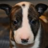 ***RESERVED*** Rossi Chippewa Moon