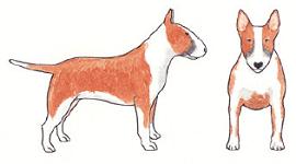 smut-illustration