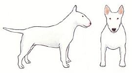 white-illustration