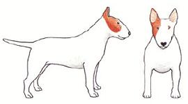 white-illustration2